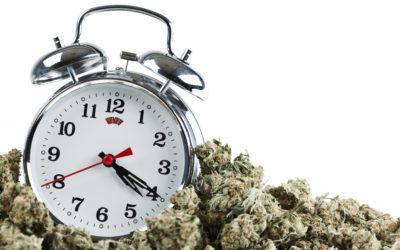 Is Your Workplace Prepared for Legal Marijuana?