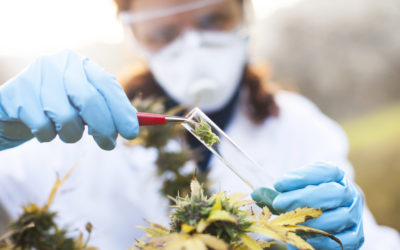 More Firms Being Sued for Discrimination over Medical Marijuana